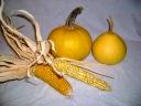 garbuzy-i-kukurudza