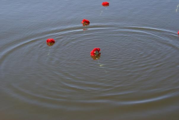 квіти на воді