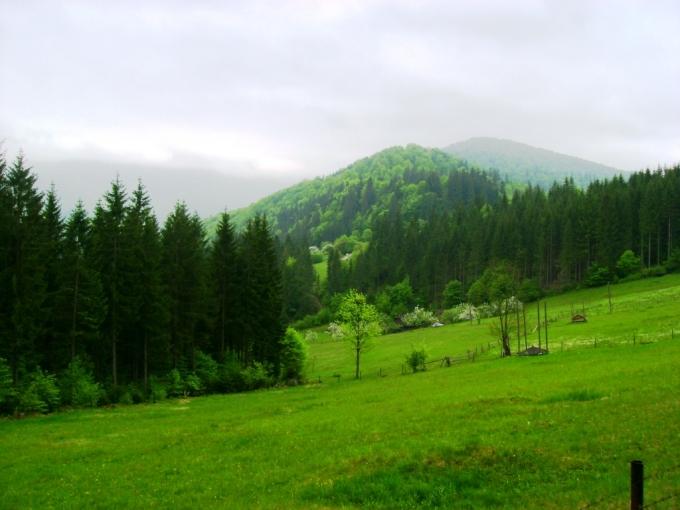 Далекий туман. Автор Артер Сіренко